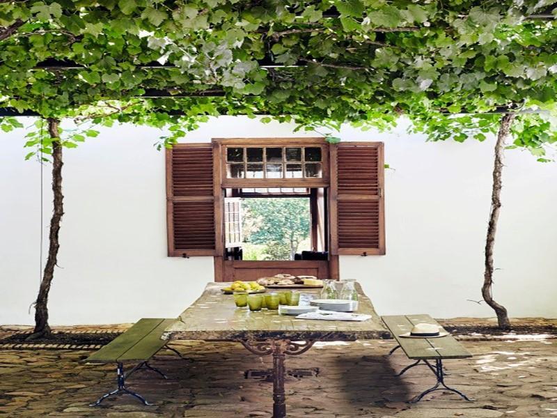 16 espécies de trepadeiras com flor para cobrir muros, cercas, treliças e pérgolas